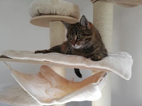 Denkt und fühlt eine Katze wirklich wie ich?