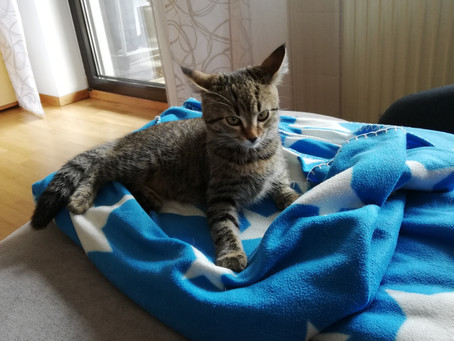 Vorankuendigung Video Koerpersprache Katze