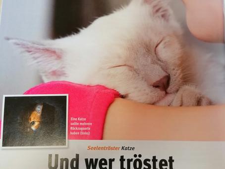 Seelentröster Katze – und wer tröstet eigentlich die Katze?