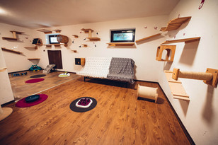 katzenpension-gruppenraum-couch-catscare.jpg
