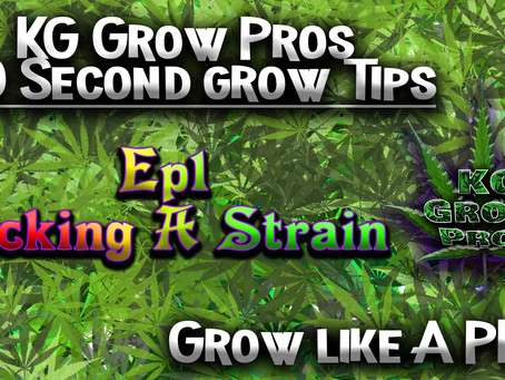 Our First in the Series... 60 Second grow Tips!