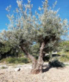 olivier gîte aumelas.jpg