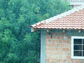 איתור נזילות ובעיות איטום בגגות
