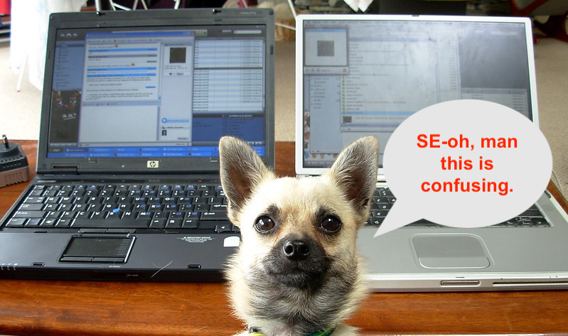 Small dog in front of two laptops saying SEO is confusing.