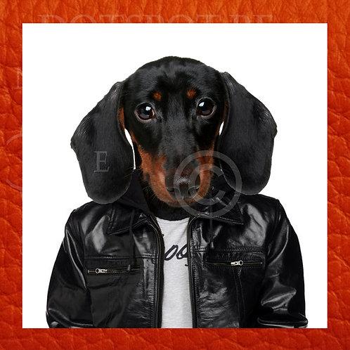 Dog Cuir 4
