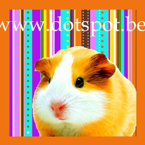 Kid Hamster