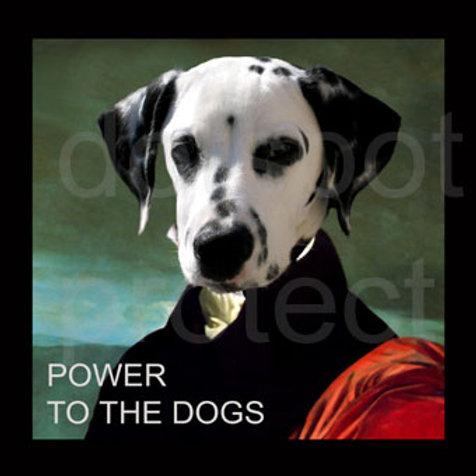 Power Dalmatien