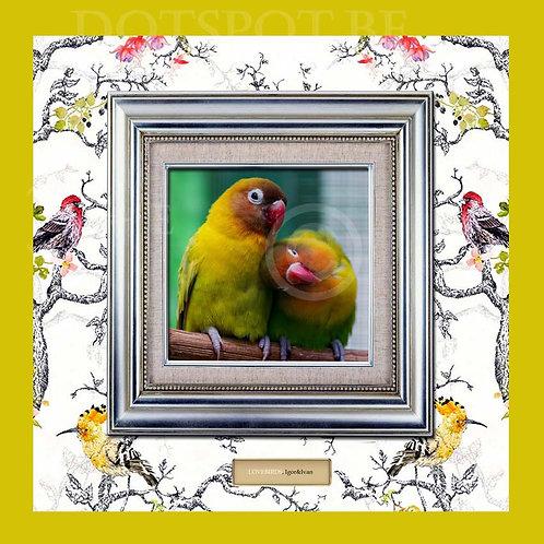 Love Bird 3