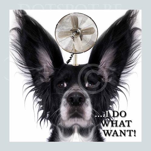 Dog I do what I want