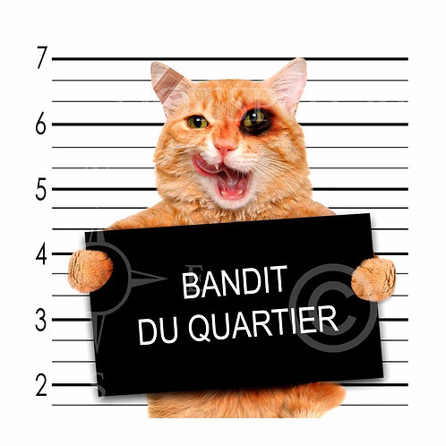 Cat Killer