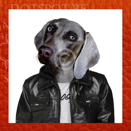 Dog Cuir 1