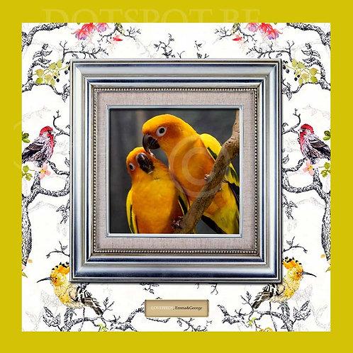 Love Bird 1