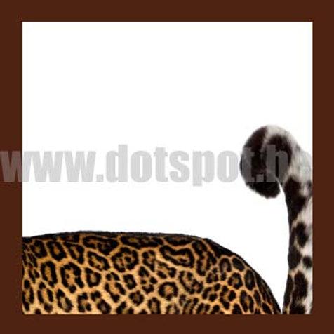 Leopard Suite