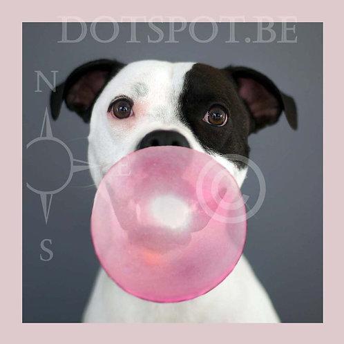Dog Gum 1