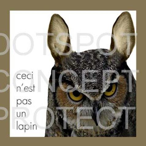 Lapin Hibou
