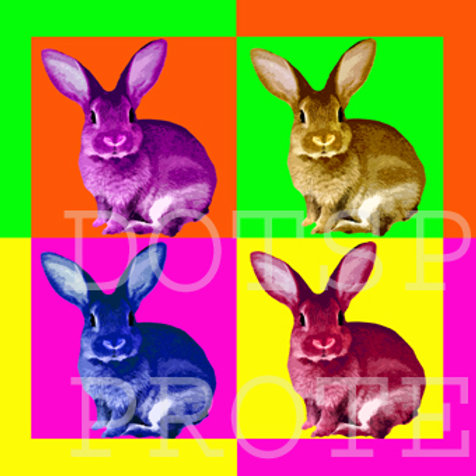 Lapin Popart