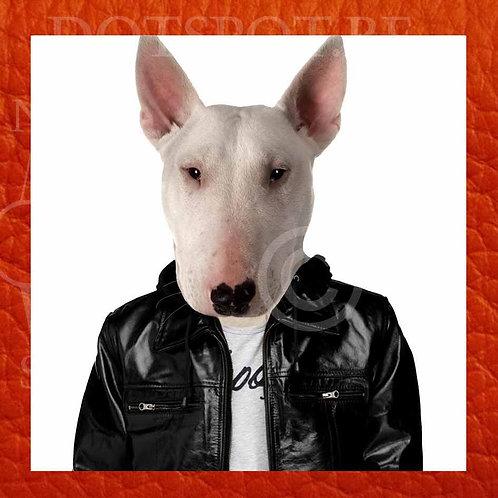Dog Cuir 5