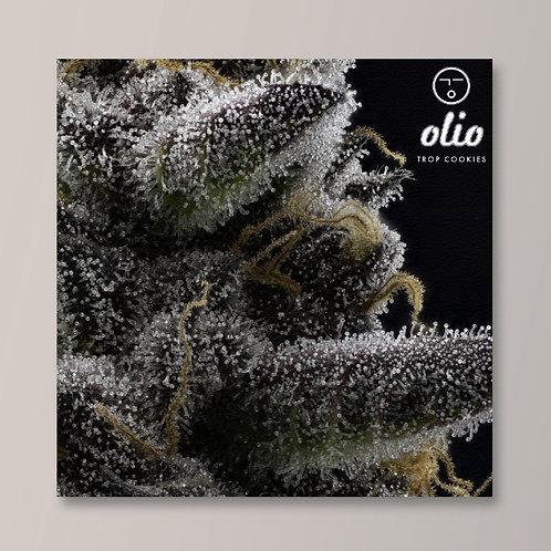 OLIO FLOWER CANVAS