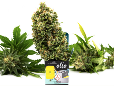 The Beginning: Welcome to the Olio Grow