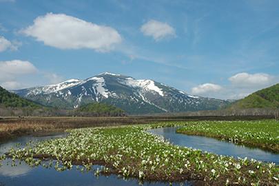 forest bathing in Oze National Park, Gunma, Japan