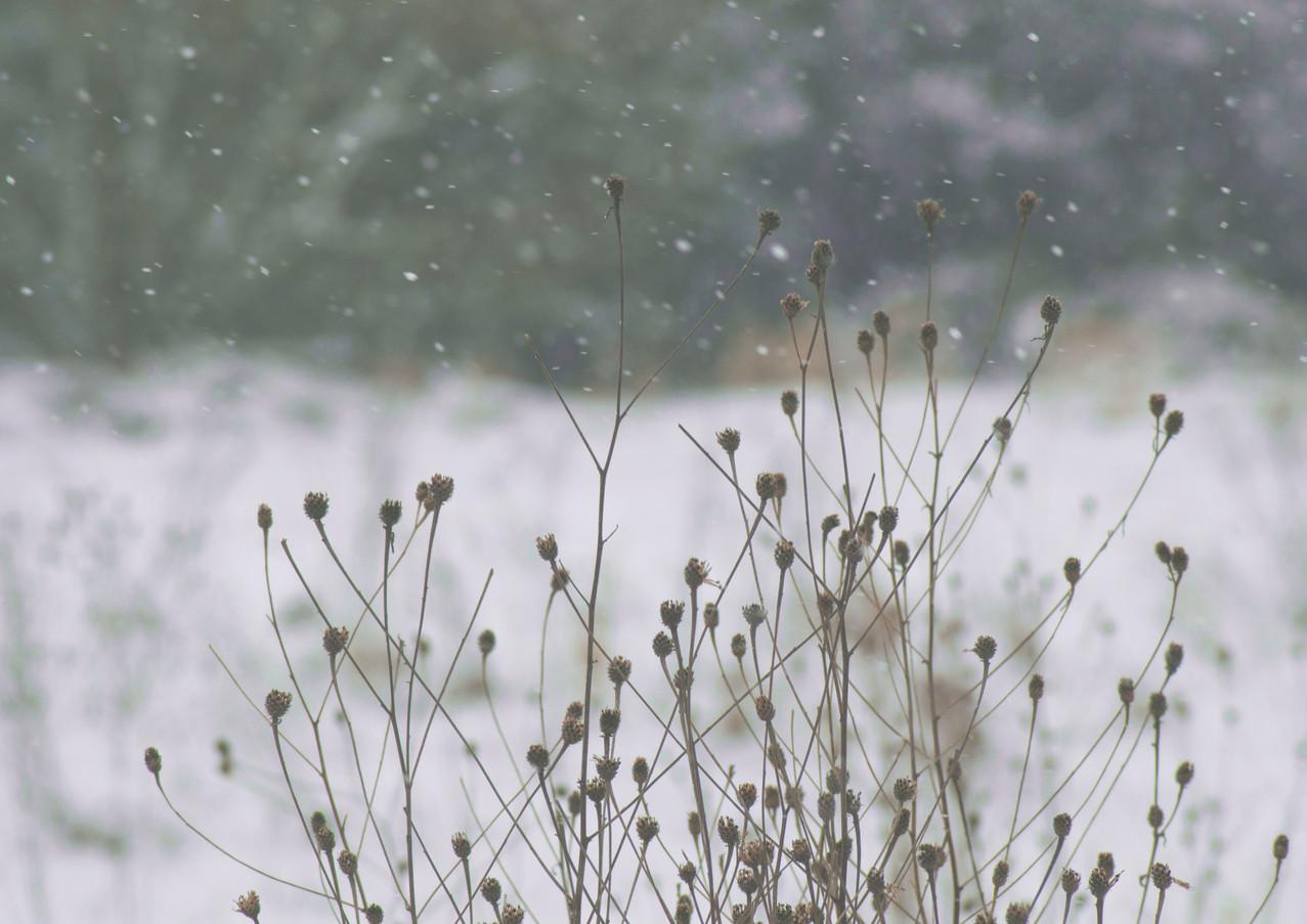 Snowy floweres.jpg