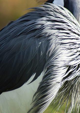 zoo 15.jpg