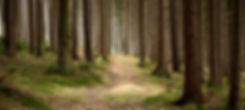 tichý Forest