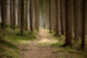 Quiet Forest