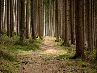 Los Bosques: Una apuesta segura en la lucha contra el Cambio Climático