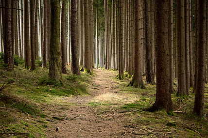 A quiet, peaceful forest.