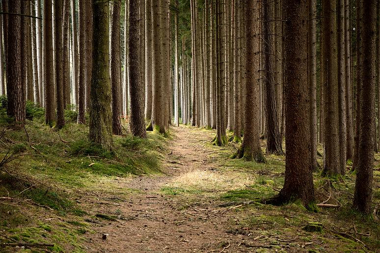 Quiet Forest scene