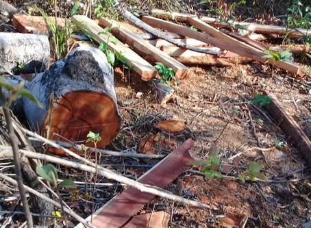 No Cerrado Piauiense, comunidade de quebradeiras de coco denuncia extração ilegal de madeira nativa