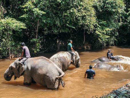 Jom Kenali Kuala Gandah & Gajah Asia