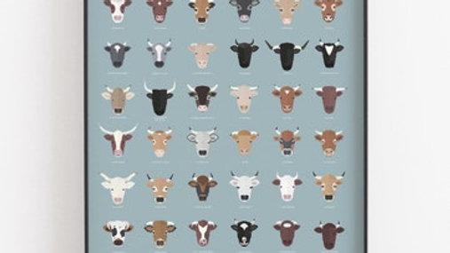 Affiche - Vaches de France