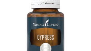 Cypress Essential Oil -YL