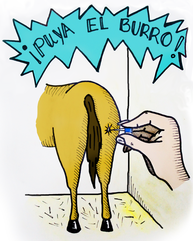 Puya el Burro!