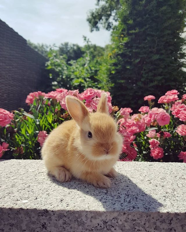 Our newest little arrivals 🐰🌼_._._._