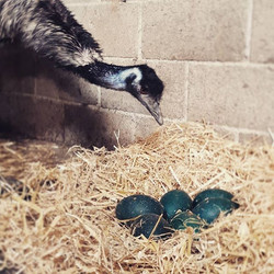 Checking her eggs!🐣🌼_._._._