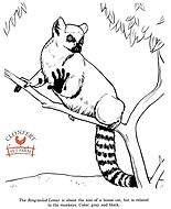 ring-tailed-lemur-drawing-4.jpg