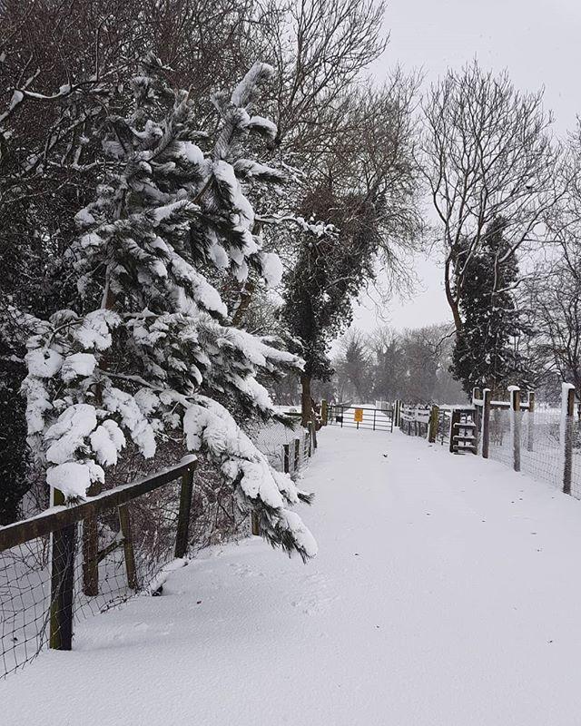 Clonferts Winter Wonderland ❄_._