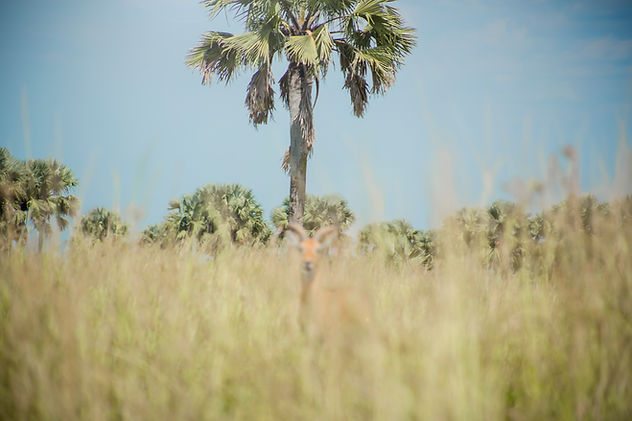 safari_2.jpg