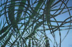ROBERT DEQUOY  jardins 06