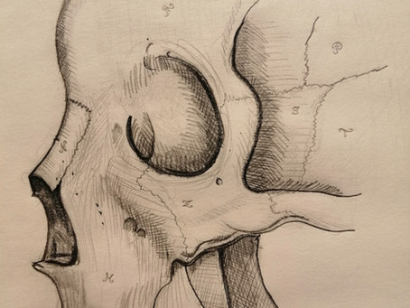 Dessins persos d'anatomie