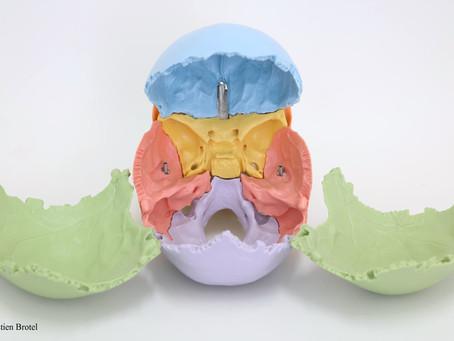 Anatomie du crâne