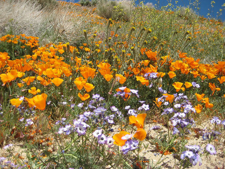 Native Plant Gardening:  A 'Growing' Trend