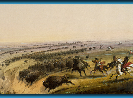 As Canada Quarantines, Bison Appear On The Plains As Indigenous People Roam Freely Once Again