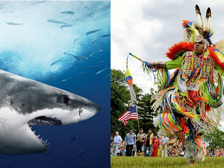 Indigenous People In Canada Celebrate Their One Day While Sharks Get A Whole Week
