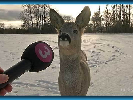 """News Reporter Interviews Deer In Vain Attempt """"To Connect With The Local Indians"""""""