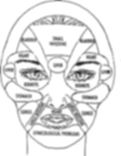 Face Organ Connections Chart