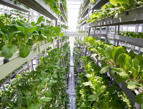 Singapore_Urban_Farming (1).png